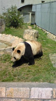 パンダのランチタイム♪