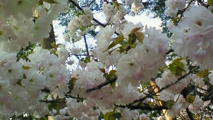 遅ればせの春